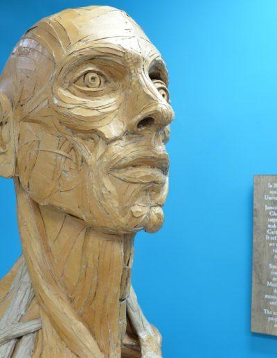 James-Lake-Anatomical-torso